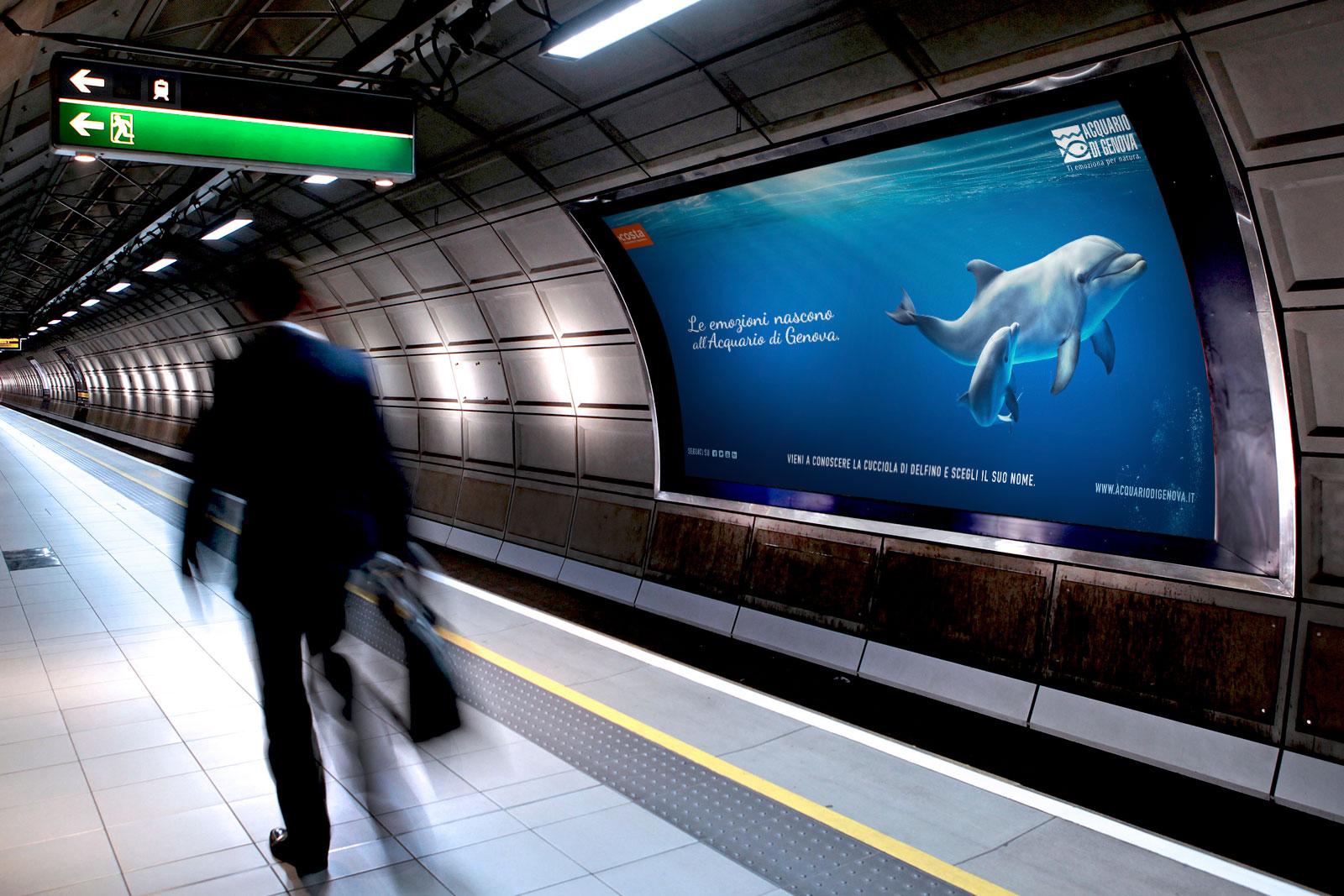 delfini-cuccioli-stazione_2